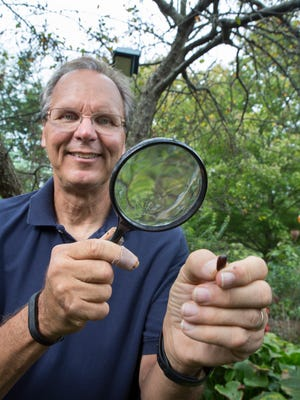 WLKY meteorologist John Belski uses a magnifying glass to study a persimmon seed. Belski studies the accuracy of predicting the weather through natural signs. Oct. 10, 2017.