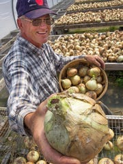 John Adams, owner of Adams Farm Market in Williston, shows off recently harvested Walla Walla sweet onions, spread out to dry in the greenhouse at the market on Monday, August 4, 2014.