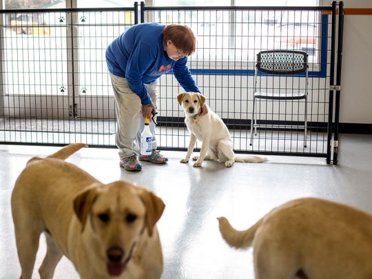 Mary Power, of Fort Gratiot, pets a dog Friday, March 24, 2017 at Dogville Doggy Daycare, 1639 Garfield St. in Port Huron.