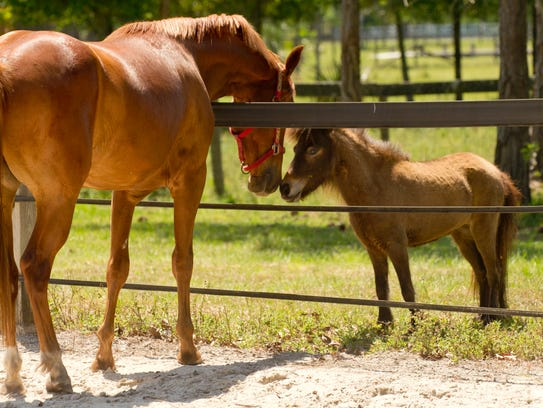 Horse lovers can tour the Equine Rescue and Adoption