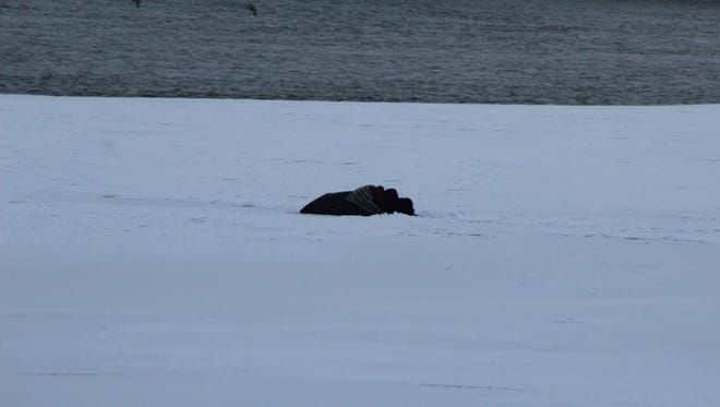 Ben Staples, 42, lies on the Missouri River ice as evening closes. Staples has refused all attempts at rescue