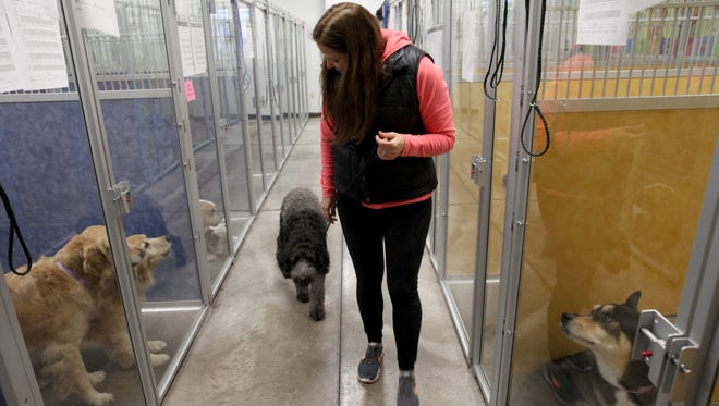 Renee Braddon returns dogs from and afternoon outdoor play time at her pet hotel, Finger Lakes Pet Resort.