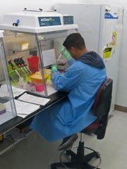An employee with the CDC tests human blood samples