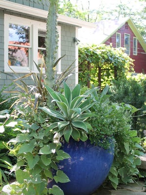 Agave gives that special structural quality to a potted arrangement.