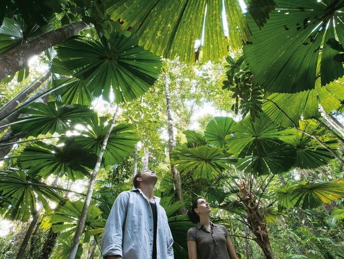 Daintree National Park, the largest rain forest in Australia, is thick with ferns, palms and rare conifers, some of the earliest trees to develop on Earth.