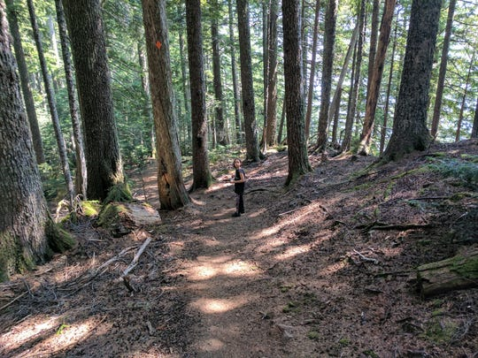Erysse Elliott hikes in Olympic National Forest in