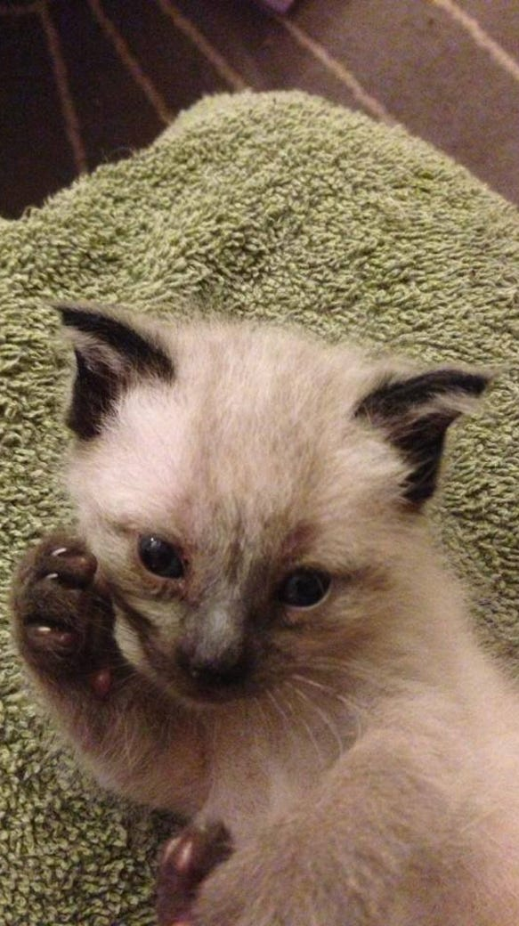 Maxwell Jamal at three weeks old. He was found under