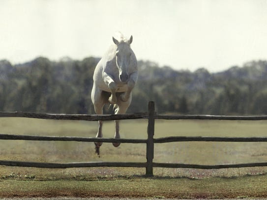 Subject: Famous jumping horse champion named Snowman