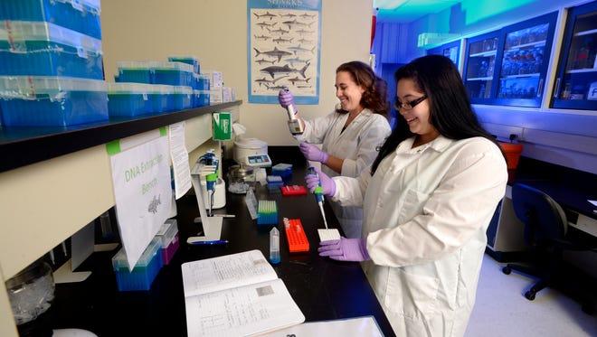University of West Florida Assistant Professor Toby Daly-Engel and marine biology major Emily Miller sequence shark DNA.