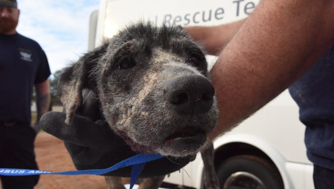 Four abused dogs were rescued in Claiborne Parish Feb. 15 by the Humane Society of the United States and Louisiana SPCA assisted the Claiborne Parish Sheriff's Office.