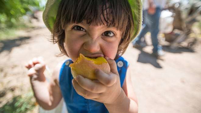 Kids and adults of all ages will have a...wait for it…peachy time at the Schnepf Farms Peach Festival. Free hayrides to peach picking, amusement rides, a tasting pavilion and more are offered from 7:30 a.m.-4 p.m. Friday-Sunday, May 12-14; and Saturday-Sunday, May 20-May 21. Schnepf Farms, 24610 S. Rittenhouse Road, Queen Creek. $5; free for ages 12 and younger. Rides are $3 each or $15 for a wristband. schnepffarms.com.