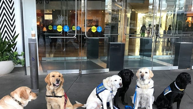 Willow, far right, is a facility dog from Montgomery, Al., who is working in Las Vegas this week with survivors of the Oct. 1 shooting at the Route 91 Harvest music festival on the Las Vegas Strip.