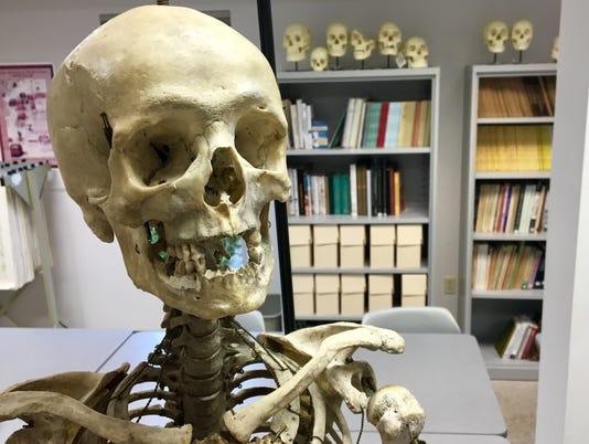 Skeleton skull