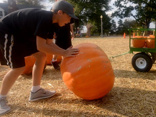 Hayden Main rolls a large pumpkin to a wagon to a wagon