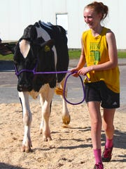 A Franklin County Dairy Four-H participant walks her