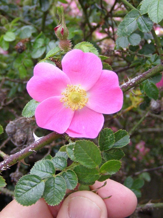 635668029254515590-garden2011-05-22-008