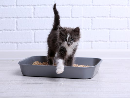 636214587523529287-bigstock-Small-gray-kitten-in-plastic-l-93532967.jpg