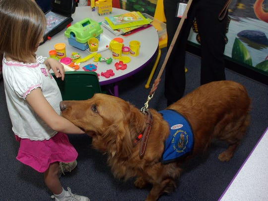 Sam, golden retriever/Irish setter specially trained to be a courthouse dog, is the most experienced courthouse dog in Arizona. He greets a 5-year-old girl in the Maricopa County AttorneyÕs Office. Ê