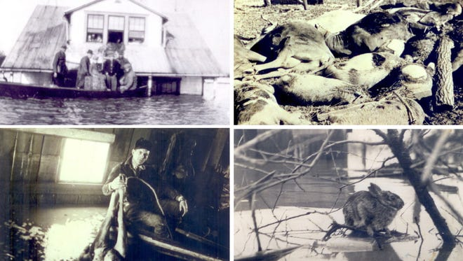 This composite of four pictures shows, clockwise from upper left, the rescue of people at the McAhren home during the height of the flood; dead livestock left after the waters receded; a rabbit stranded by the rising water; and a man holding up the legs of a drowned cow inside a flooded barn.