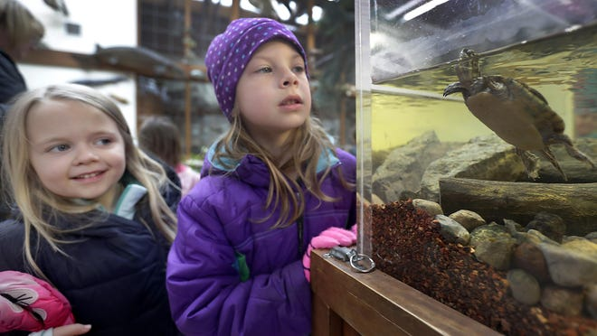 Janssen Elementary School 5K students Wren Bricco, left, and Ella Brockman watch turtles in a tank April 11 during a field trip to Heckrodt Wetland Reserve in Menasha.