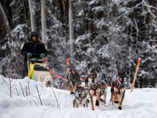 Nicolas Petit races in an Iditarod Trail Sled Dog Race