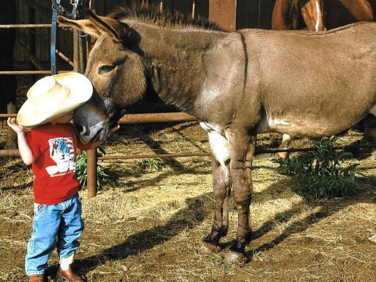 Boy meets donkey - an unlikely friendship formed on a Callahan County ranch between John Compere's grandson and what he jokes was one of the few remaining Democrats in those parts.