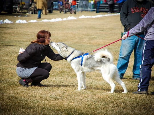 A visitor greets a sled dog at the annual Cataloochee Ranch Breakfast with the Mushers. This year's event is Sunday, Feb. 28.