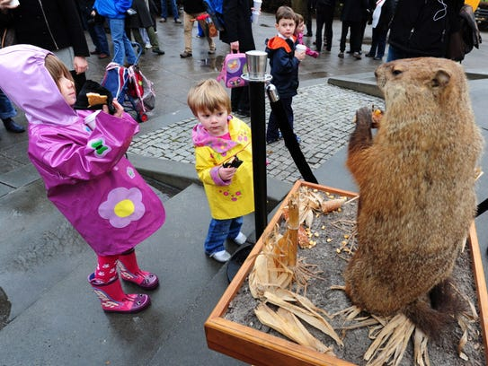 Children  look at Potomac Phil, a taxidermied groundhog