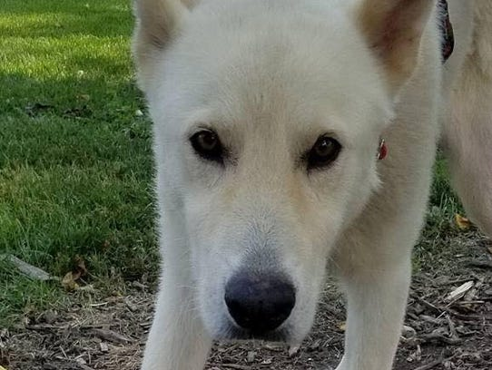 This dog, Eagle Lake, was rescued by AHeinz57 Pet Rescue
