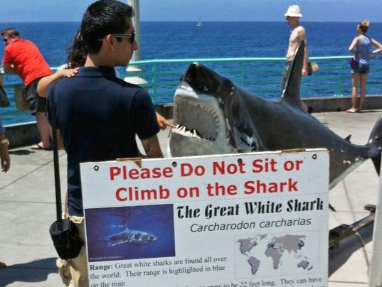 AP Great White Shark Bite