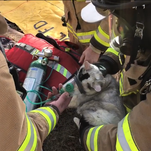 Nine lives: Watch as firefighters give oxygen to cat after fire