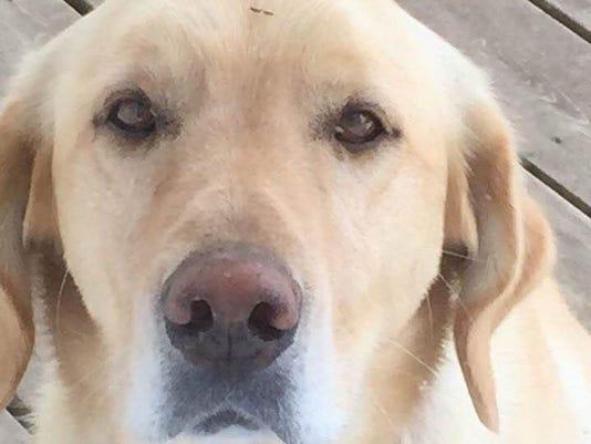 Jake-the-Dog.jpg
