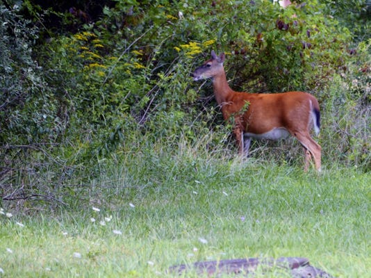 """For this particular hunt at """"Karl's farm,"""" legal deer proved to be scarce."""