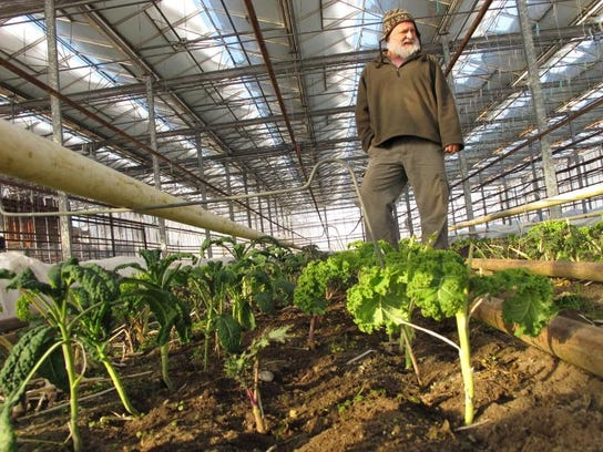 David Miskell looks over his mid-winter crop of organic