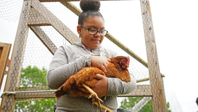 Eleven-year-old Mydia Pritchett, a sixth-grader at George Read Middle School, holds a chicken that is being raised by William Penn High School students in the agriculture program. Chickens are among the farm animals that could be allowed to become emotional support animals if the Wilmington City Council passes an ordinance.