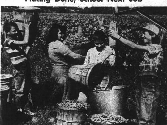 Students Vernon Meighen, June Henry and John Gallagher get their beans weighed by June Nolan at Oak Crest Farm, two miles north of Salem on Wallace Road. School was delayed to allow students like these to help with the bean harvest.