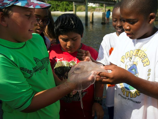 Jeffrey Hawkins (from left), 10, Alexander Gomez Mazariegos, 11, and Deondre Davis, 12, examine a moon jellyfish they found in the Indian River Lagoon near the Martin County Schools Environmental Studies Center in Jensen Beach during the Camp W.E.T. (Water, Environment, Today) summer camp in 2014.