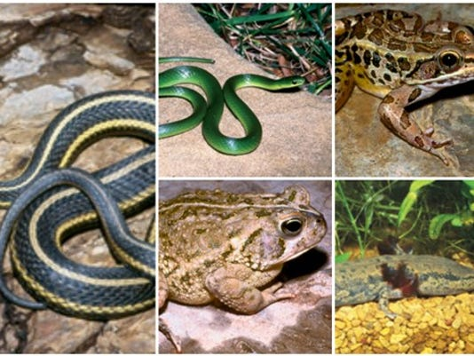 636122927738930734-reptiles.jpg