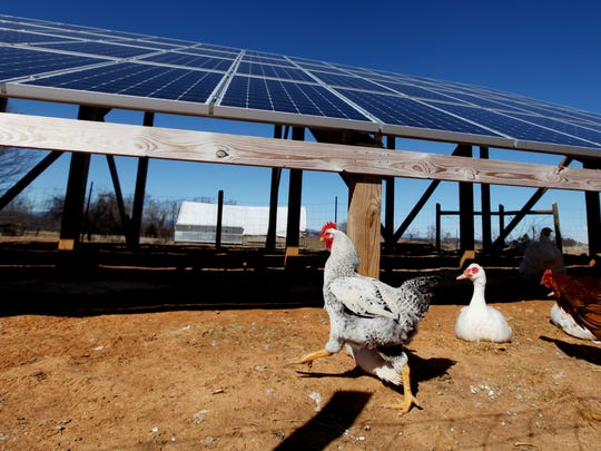 A ground-mounted photovoltaic system with 60 solar panels collects the sun's energy at Charis Eco-Farm in Staunton as well as provides shelter for their chickens, ducks and turkeys.