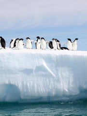 Adelie penguins atop an iceberg in the Antarctic.