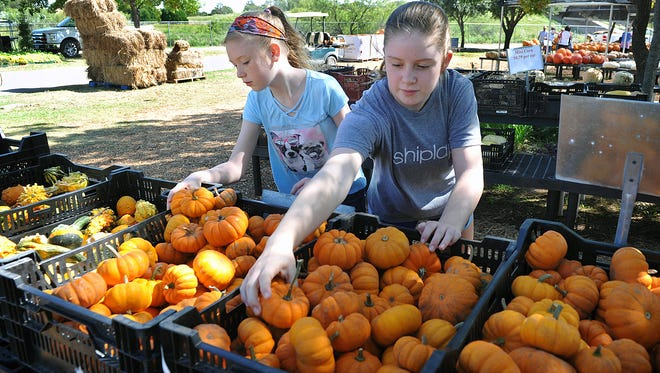 Camille, left, and Olivia Brown pick out tiny pumpkins for decorating at the Smith's Farms Pumpkin Patch Monday afternoon. The patch also has a bounce house, petting zoo, a pumpkin ride and more.