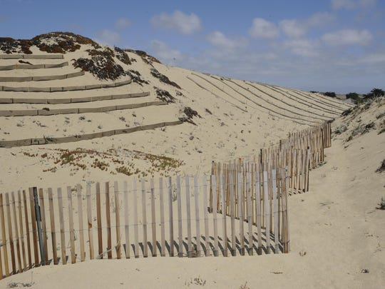 "Terraces, straw wattles and wooden slatted fencing helps prevent erosion at the Marina Dunes Preserve. ""We're trying to slow the sand down so the plants have a chance,"" said Christina McKnew, greenhouse coordinator for Return of the Natives."
