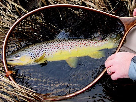 A large trout photographed by Len Harris.