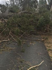 Trees block Central Avenue in Congers after Friday's