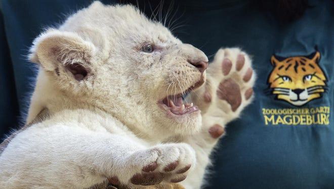 The female cub.