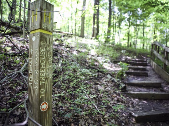 A view of a path in Mt. Airy Forest. Of its 1459 acres, Mt. Airy Forest provides multiple hiking and walking trails for its visitors.