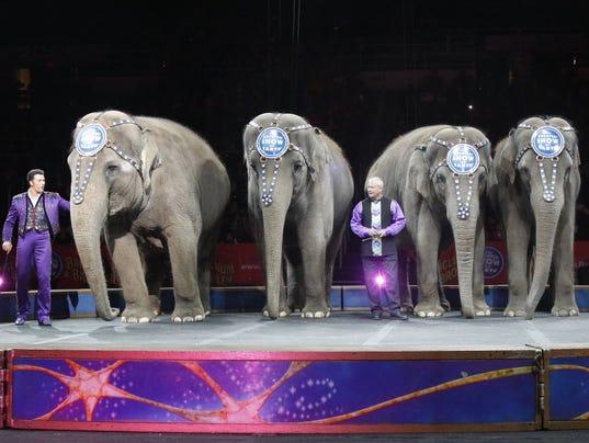 635979029687804621-your-say-elephants.JPG