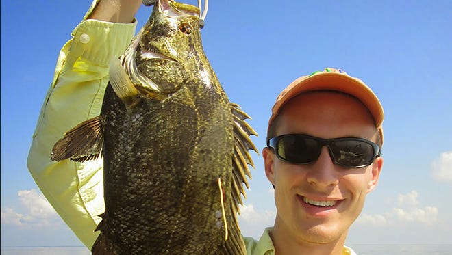 Thyis under-sized tripletail was tagged and released.