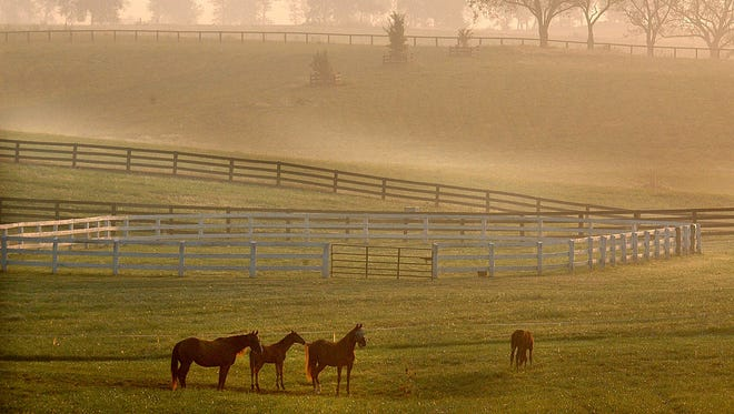 Horses stroll and graze in the fog at a farm on Hwy 127 in Boyle County near Danville, Ky., early Friday, Sept. 12, 2003.