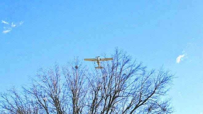 Single engine plane flies over trees near a Bowman Field runway in February 2014.
